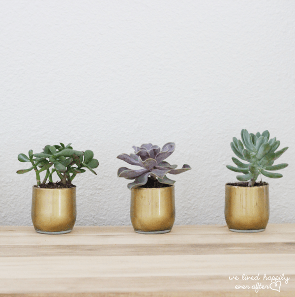 DIY Dollar Store gold planter Christmas gift with succulents on a wood table and white wall in the background.